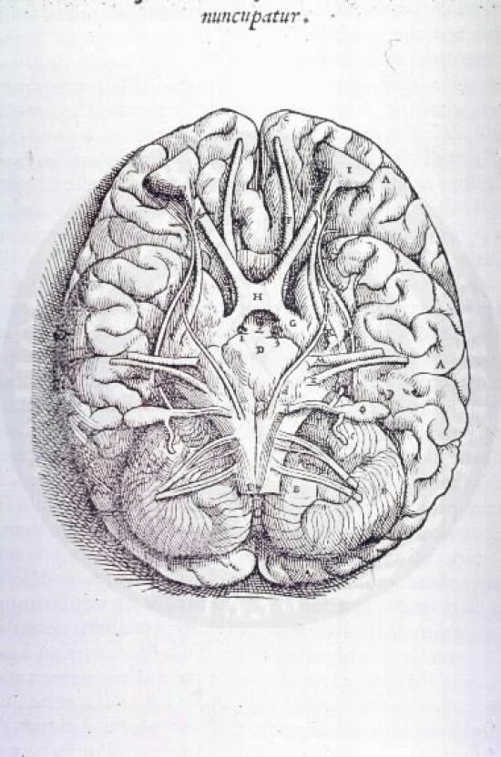 Drawn brains vesalius By book Drawing about images