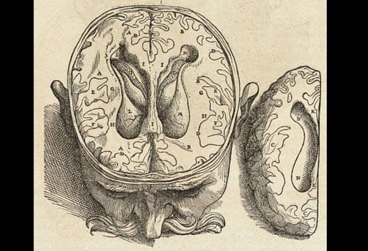 Drawn brain outer view Two from Human Plate depictions