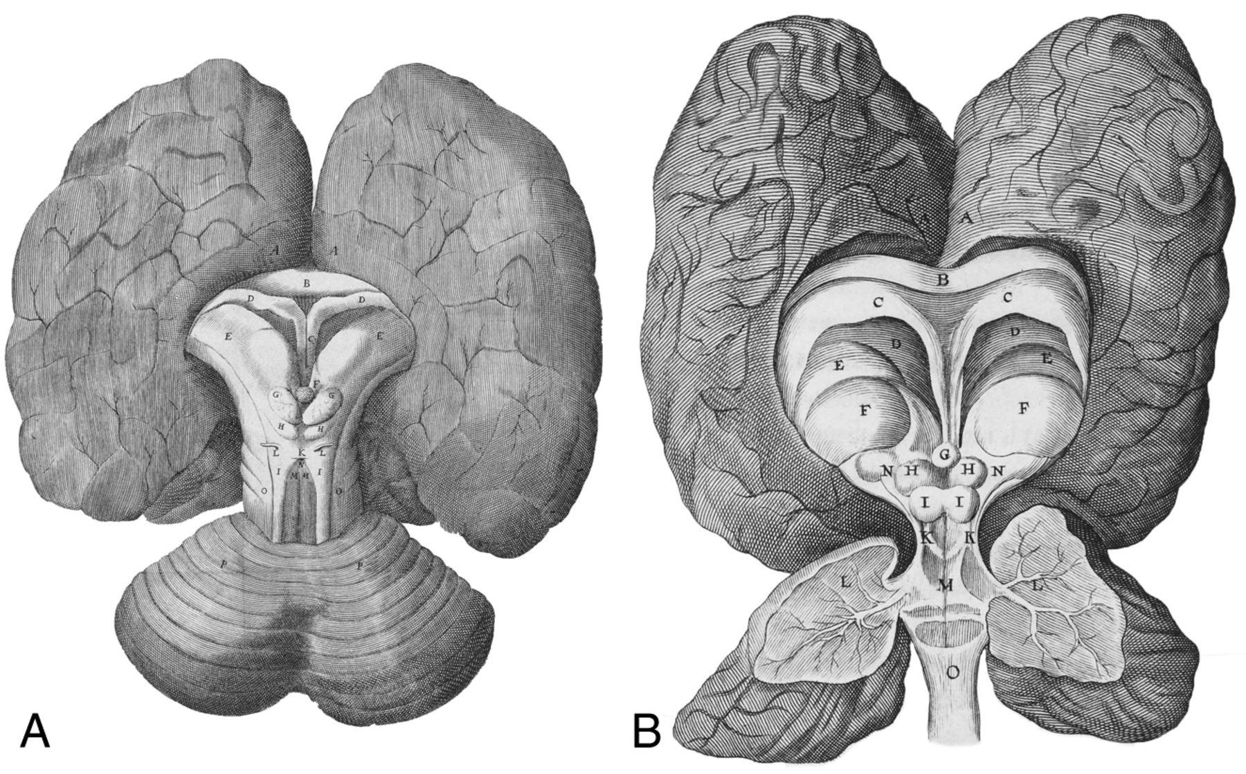 Drawn brain wing #1