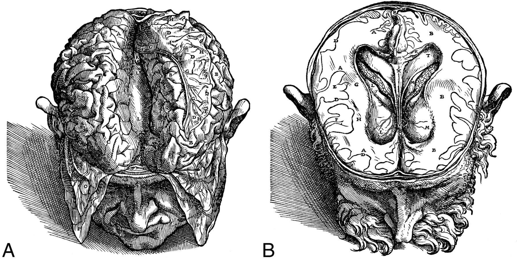 Drawn brains vesalius Thomas Download Anatomic Brain Willis: