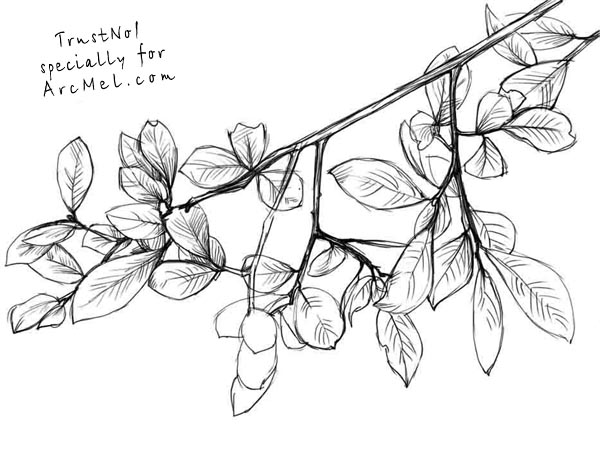 Drawn branch #6