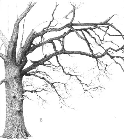 Drawn branch #7