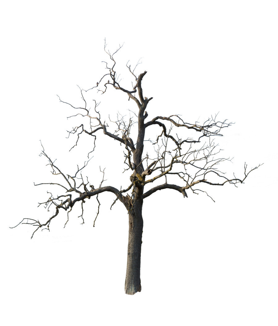 Drawn dead tree Isolated with Garden Shrub Old