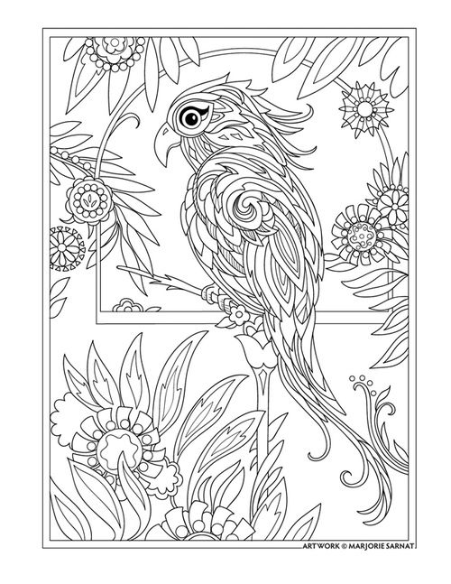 Drawn brds coloring page Kingdom Pin Pages Find Animal