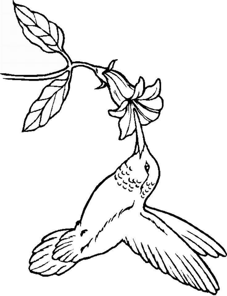 Drawn brds coloring page Pinterest Coloring like Humming on
