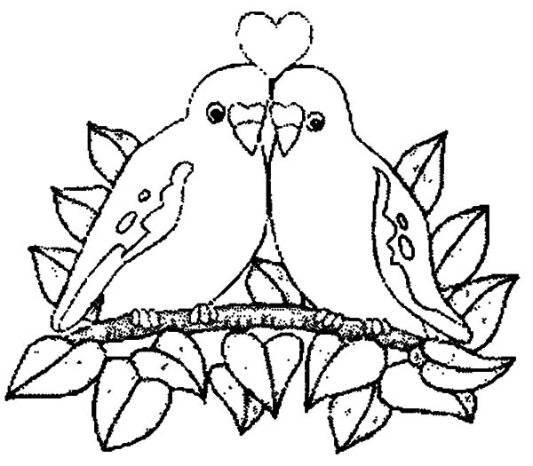 Drawn brds coloring page Com Bird Pages  atrinrayaneh