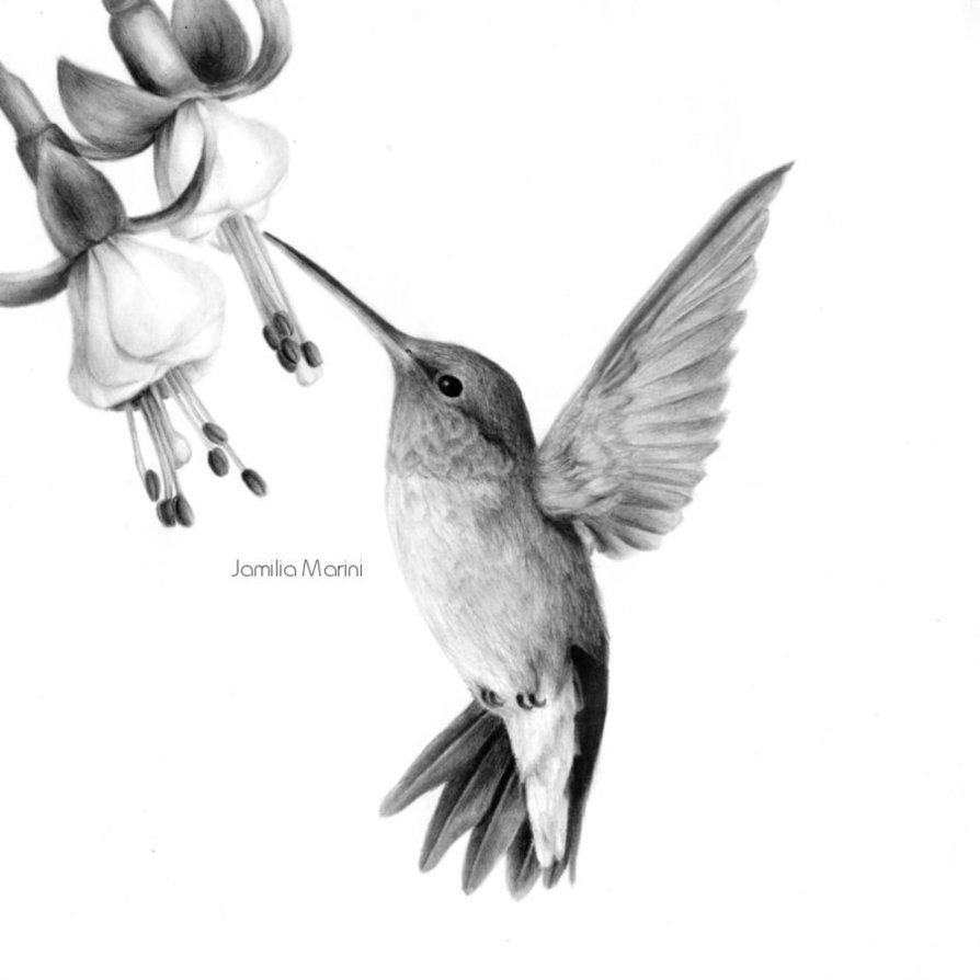 Drawn brds hummingbird Hummingbird  result draw/paint for