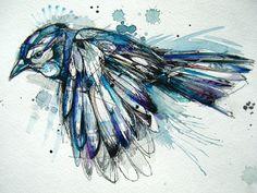 Drawn brds ink Basha Jay drawings Watercolor Blue