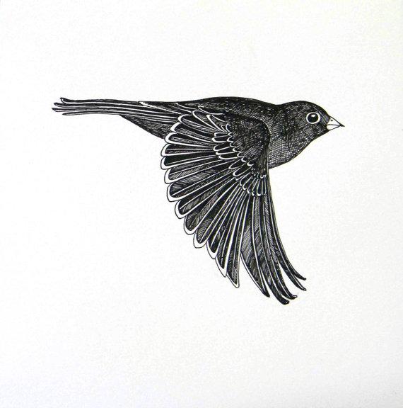 Drawn brds ink Original  Flying ink drawing