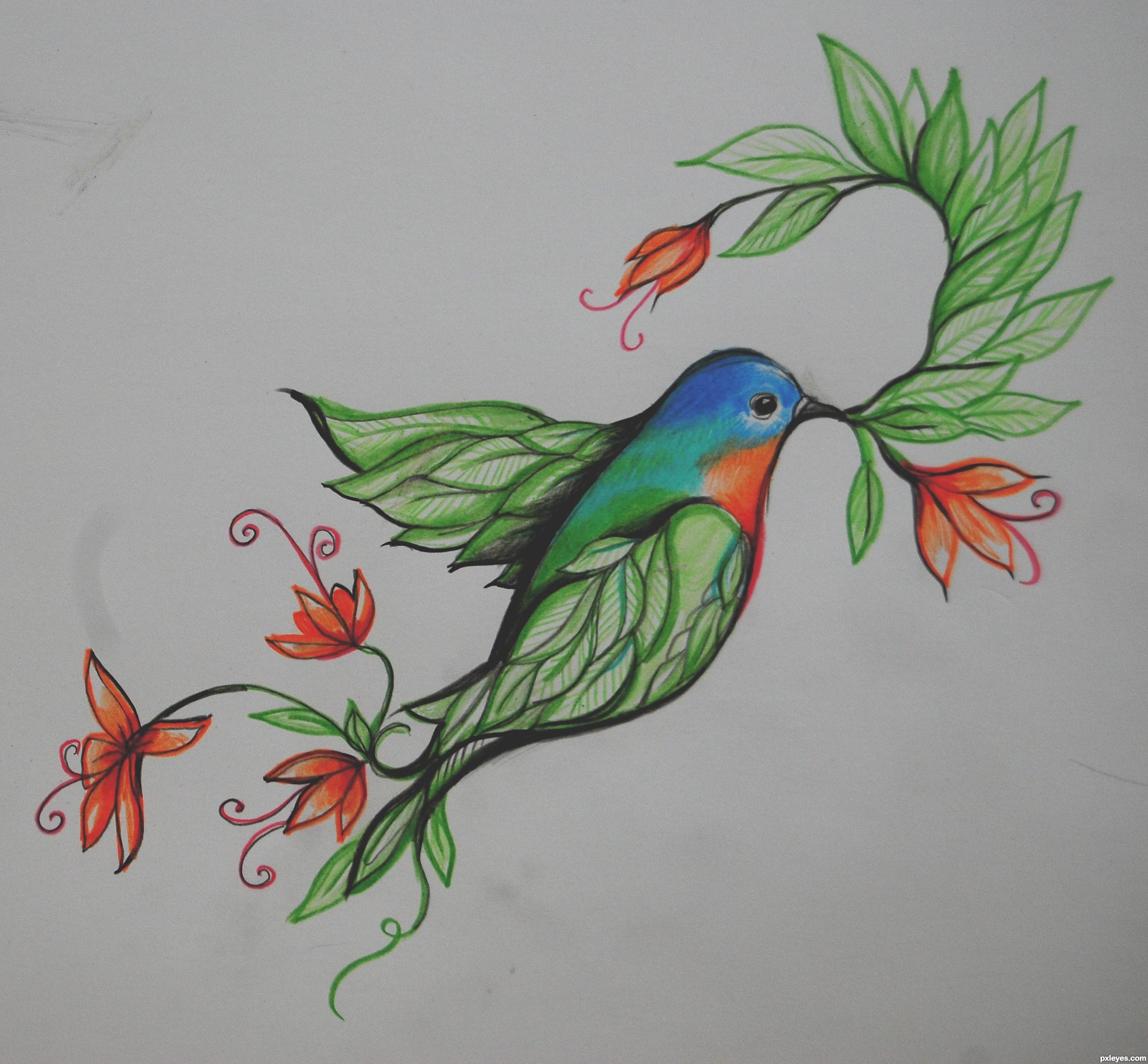 Drawn brds paradise Photo#7 And drawing Bird Drawing