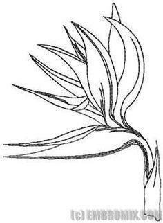 Drawn brds paradise Coloring Bird of Inspiration Keon's