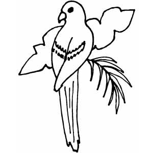 Drawn brds perched bird Birds Coloring  Pages