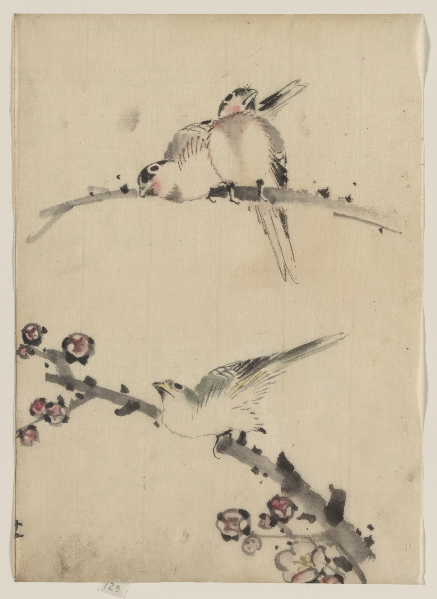 Drawn brds perched bird Perched Branches Birds Blossoms]