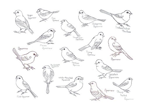 Drawn brds perched bird Nuthatch little navigation Sparrows Post