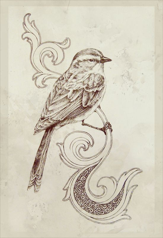 Drawn brds perched bird Love how on