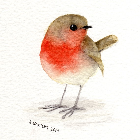 Drawn brds red robin  watercolour Little Red Robin