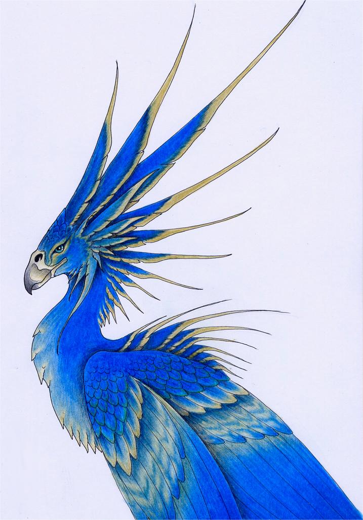 Drawn brds tropical bird Drawing Tropical Tropical birds drawing