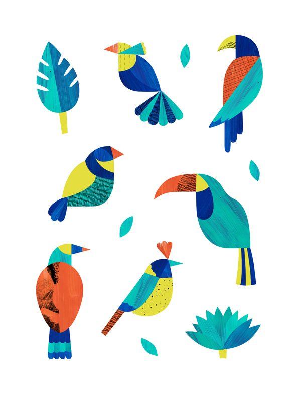 Drawn brds tropical bird Birds birds 20+ Exotic