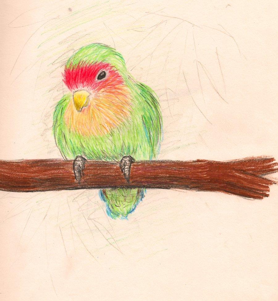 Drawn brds tropical bird Alittletoohappy bird forget tropical whose
