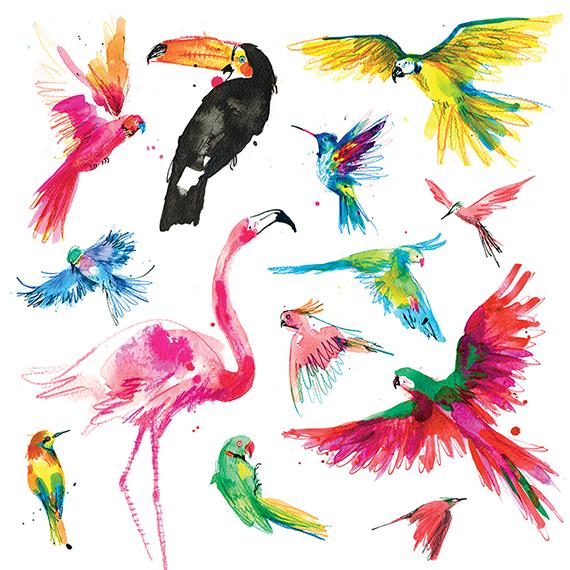 Drawn brds tropical bird Tropical Beast birds Bird and