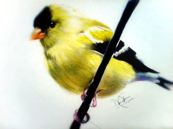 Drawn brds yellow finch On Drawing Paper Finch 27