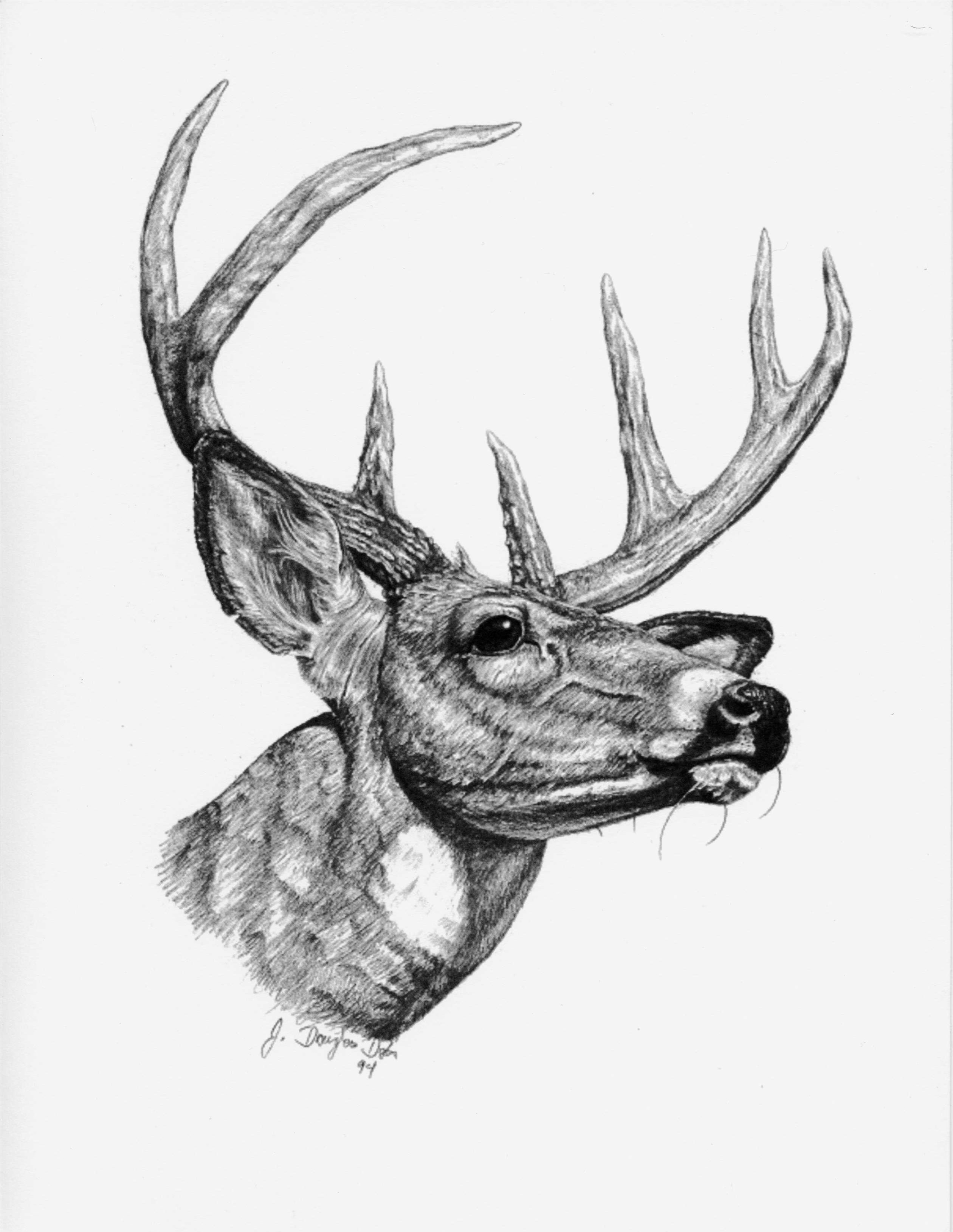 Drawn buck Deer Drawings: Drawing Gallery Pencil