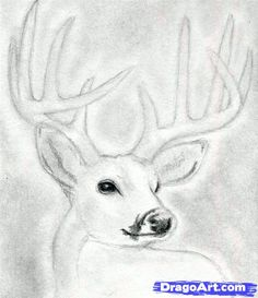 Drawn buck Buck buck a head head