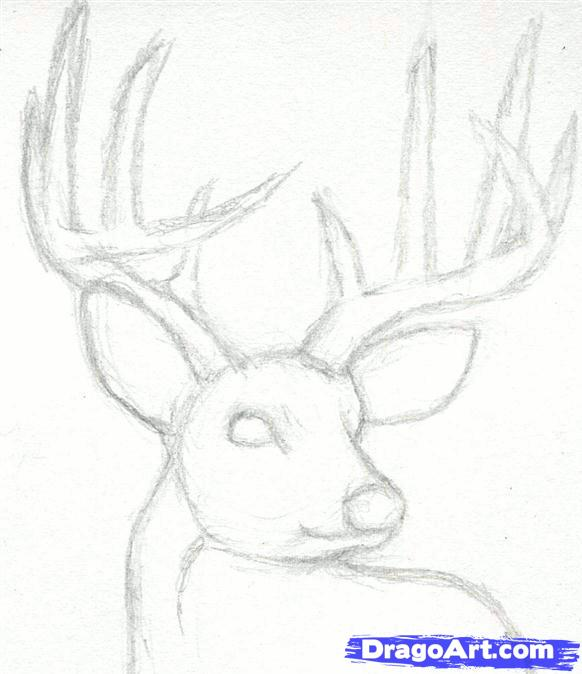 Drawn buck Realistic Buck Head a Head