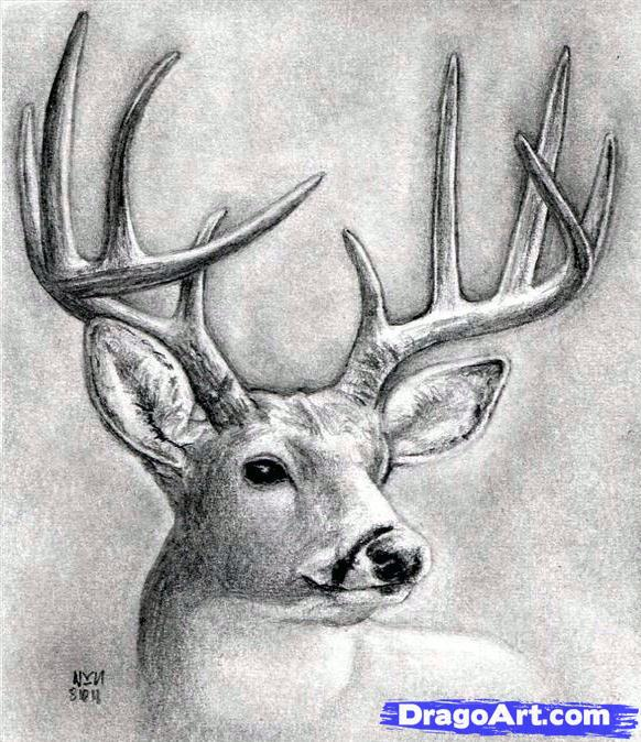 Drawn buck Animales (parte1) and on (realistas)