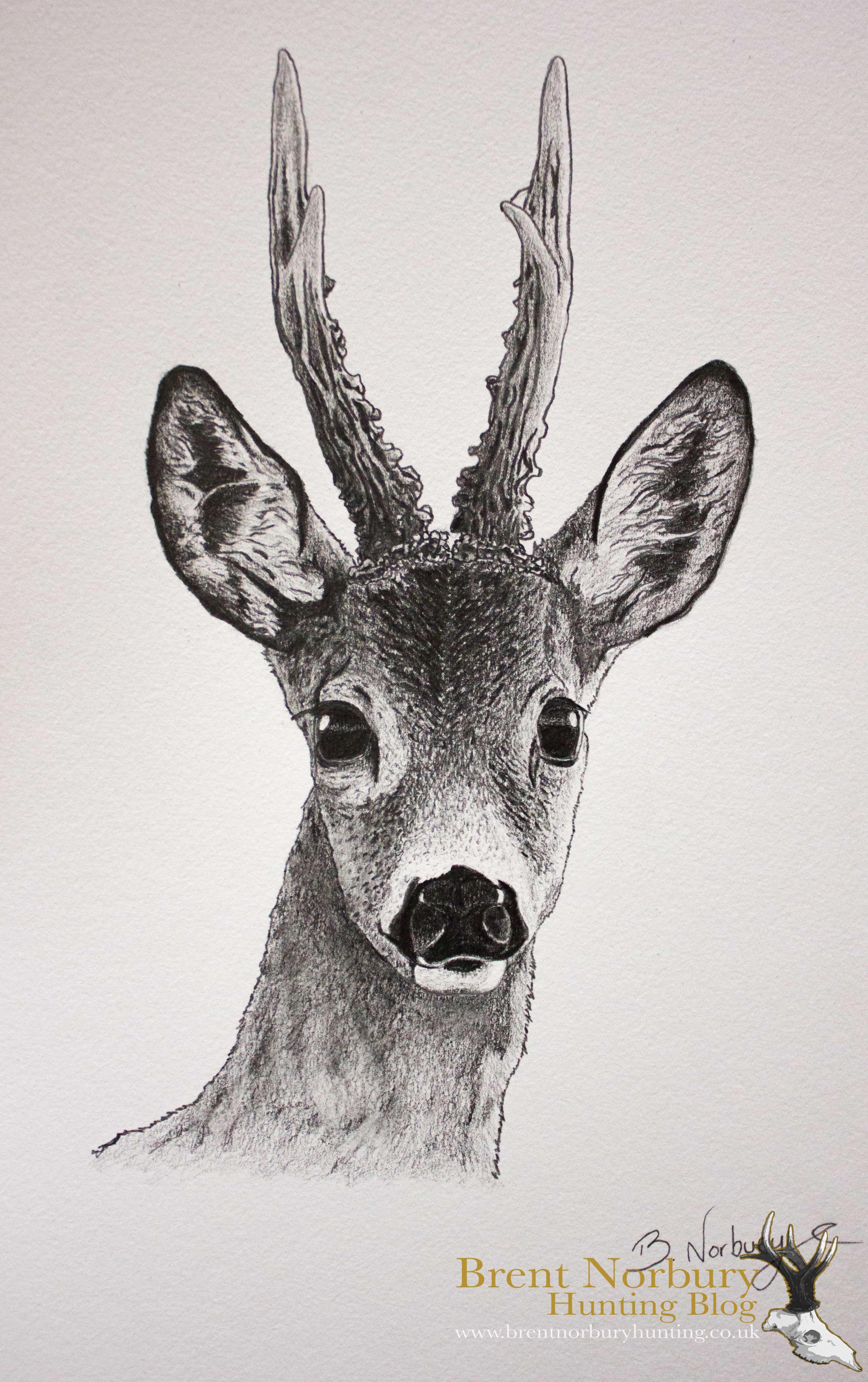 Drawn hunting  drawing deer roe Google