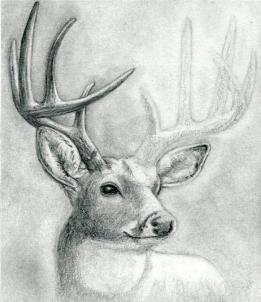 Drawn buck  buck Buck a head