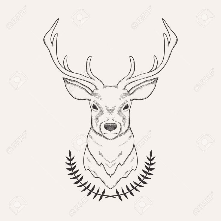 Drawn buck And Deer Illustration Deer Draw