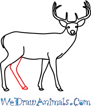 Drawn buck Buck to a Print Deer