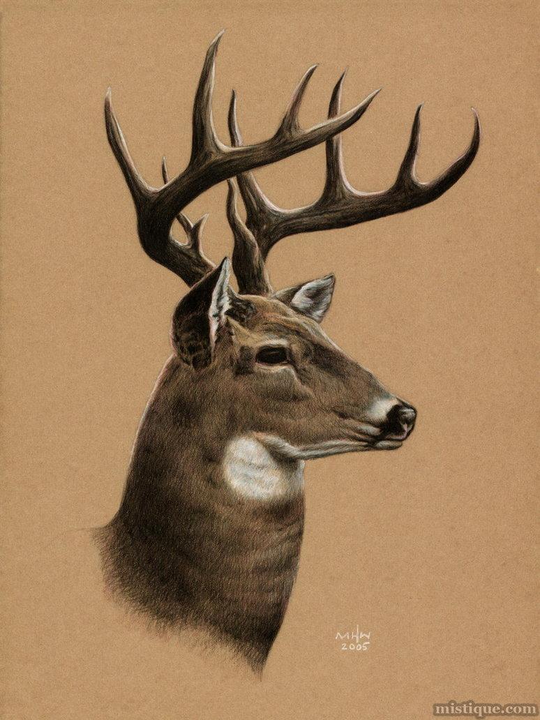 Drawn buck big buck Buck Buck MistiqueStudio MistiqueStudio by