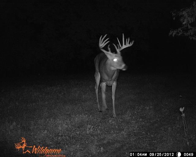 Drawn buck big buck To big in How alarou