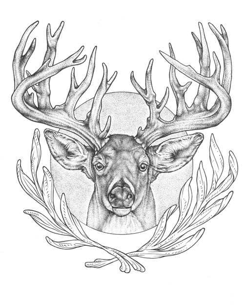 Drawn buck big buck Drawing Works for Keweenaw Buck