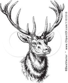 Drawn buck black and white Via Art  White Black