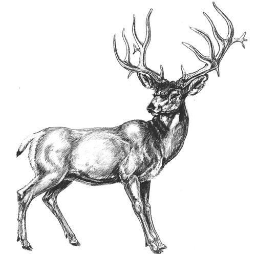 Drawn buck eating & Pinterest art How