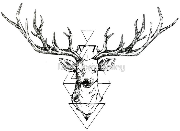 Drawn buck geometric DarkHorseBailey Pinterest Kota 113 best