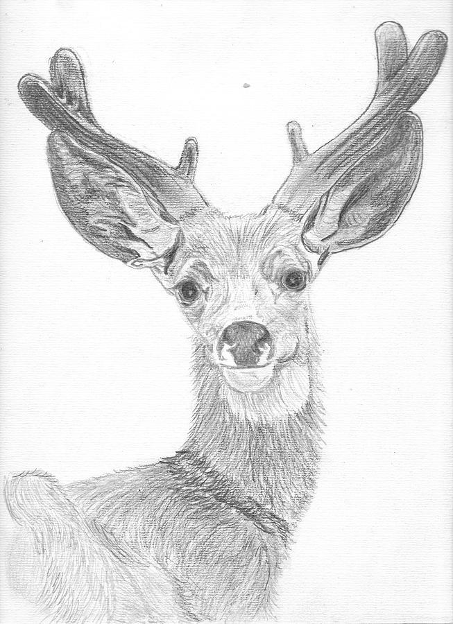 Drawn buck hand drawn Deer Wildlife Sketch By by