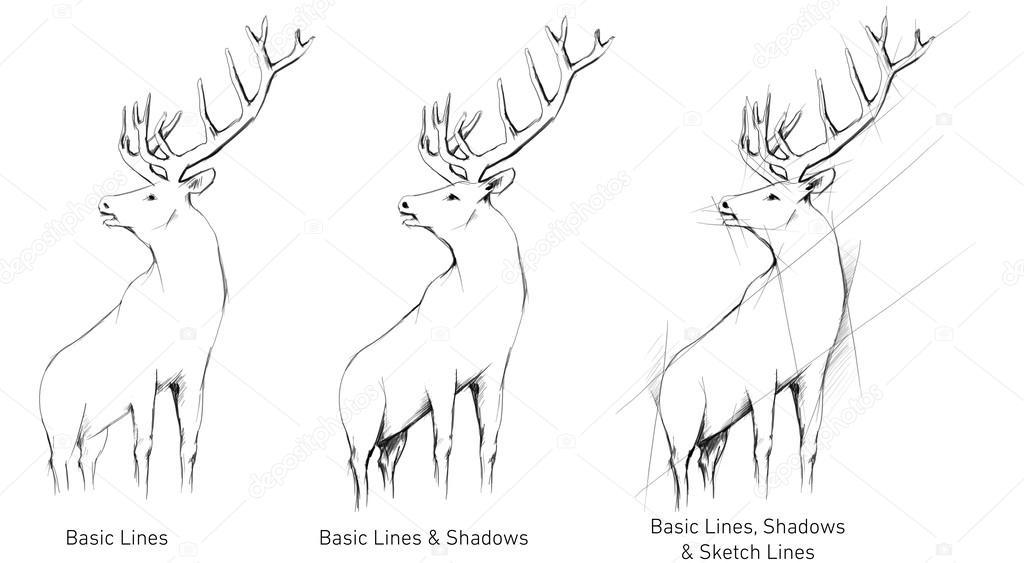 Drawn buck hand drawn Stock Deer — © #42881945