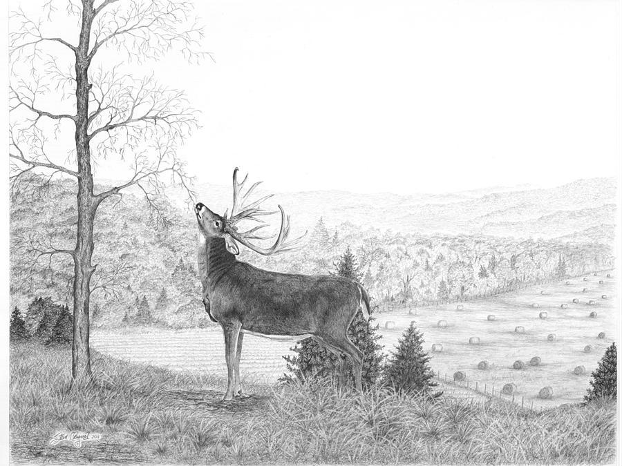 Drawn buck majestic Drawing Drawing Damery Buck Buck