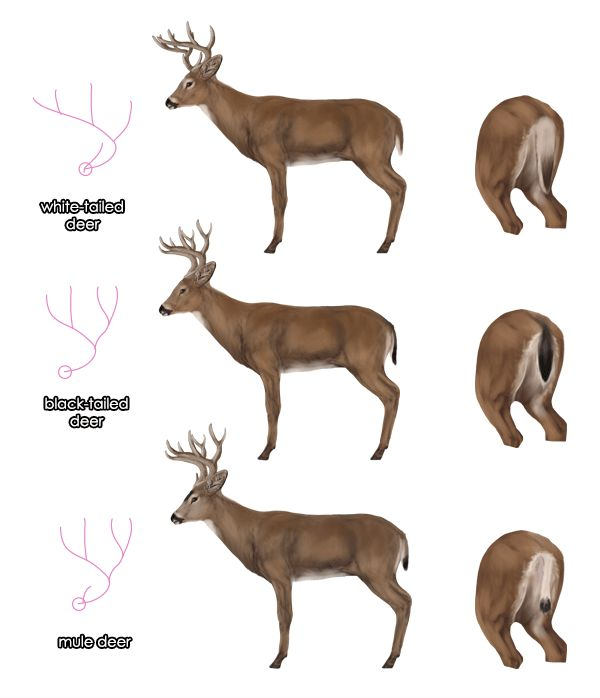 Drawn buck majestic Majestic we're on this best