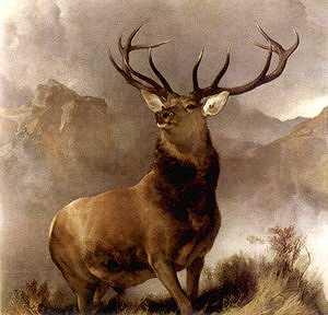 Drawn buck majestic Majesticbuck jpg 12k majesticbuck jpg