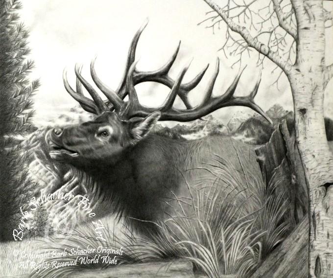 Drawn buck majestic Majestic Elk 001 Elk Bull