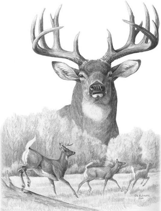 Drawn buck monster Canvas McGinley deer / Pinterest
