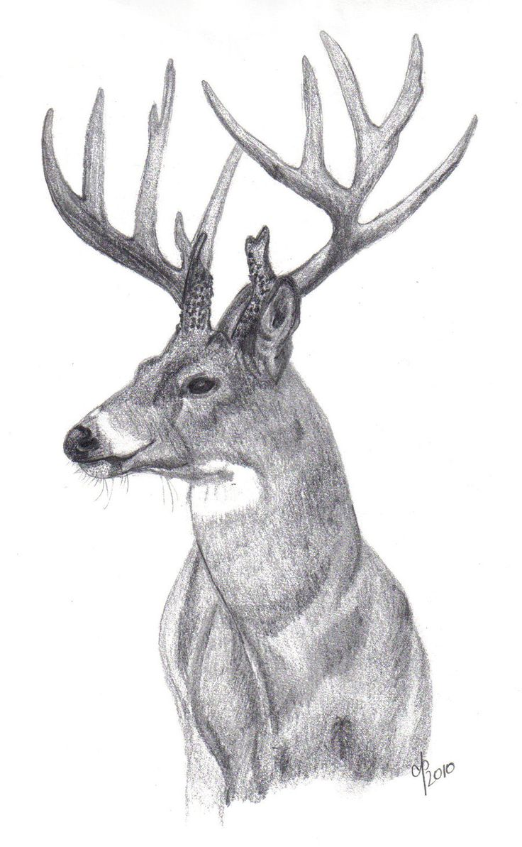 Drawn buck monster By deer Pinterest on ~cbp323