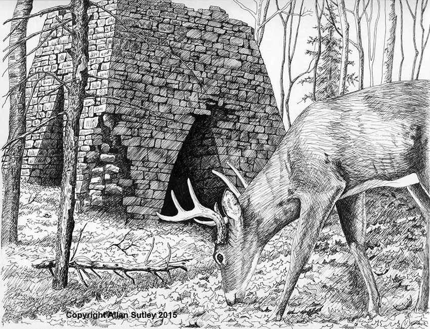 Drawn buck pen and ink Stone old Allan in Ink