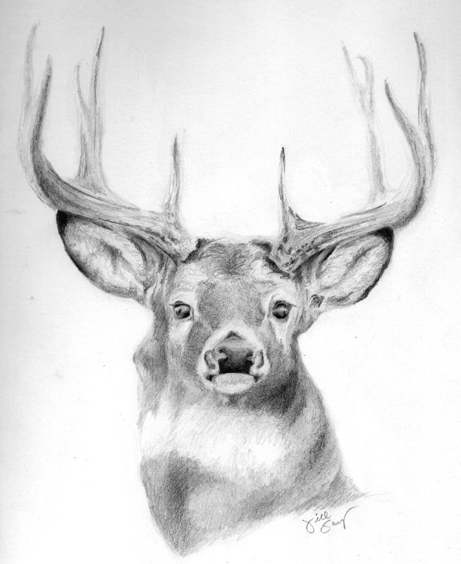 Drawn buck pencil sketch Buck Pencil Whitetail portrait byWhitetail