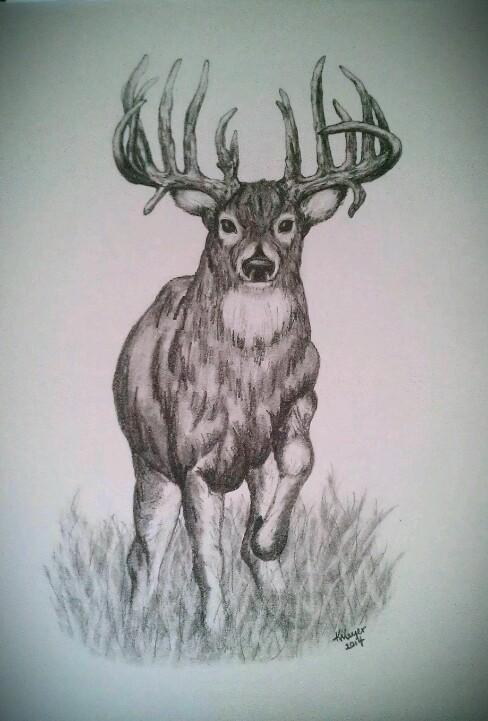Drawn buck pencil sketch Trophy buck pencil sketch Whitetail